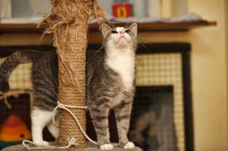 gato viendo hacia arriba